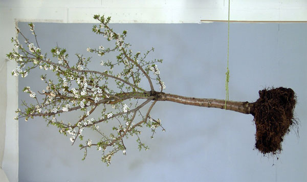 Claude Ruggirello, 'Jardin' (2006). Courtesy Gallery Claude Papilon.
