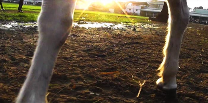 Karimah Ashadu, 'Hindsight - a horse's tale' (2012). Film still.  Image courtesy of the artist.