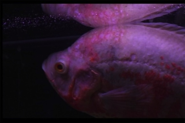 Video still from Michael E. Smith's Jellyfish (2011). Image courtesy DRAF.
